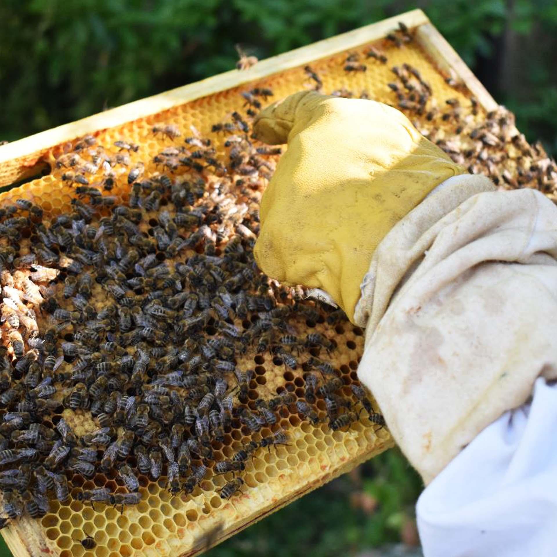 Workshop bijen communicatie koningin buiten imker bijenhuisje